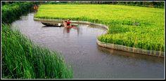 Pêche dans le Delta Vietnam, Tropical, River, Outdoor, Gardens, Fruit Garden, Good Photos, Travel, Outdoors