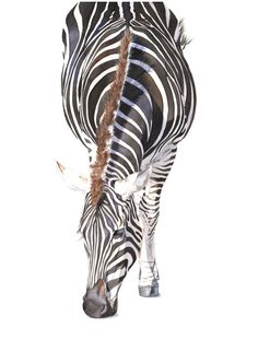 Zebra print of watercolour painting A4 size Medium by LouiseDeMasi