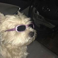 Imagen de aesthetic, dog, and glitter
