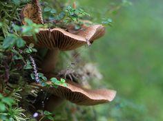 Mushroom bunks by KarenR-TB, via Flickr