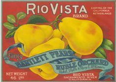 RIO VISTA Pear Box Label from Sacramento, CA
