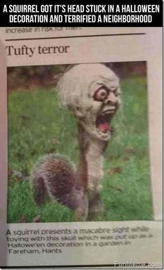 Funny Squirrel. This makes me laugh every time I see it!