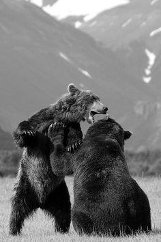 Bears. ☚