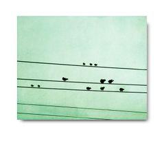 Mint Bird on a wire photo birds mint green by semisweetstudios, $30.00
