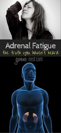 """""""Adrenal Fatigue: The Truth You Haven't Heard"""" Gwen Brown """"Dr. Rob answers all of my questions on adrenal fatigue, and BLEW my mind.here's the truth you haven't heard about adrenal fatigue. Fatiga Adrenal, Adrenal Fatigue Symptoms, Adrenal Health, Chronic Fatigue Syndrome, Adrenal Glands, Fibromyalgia Syndrome, Health And Nutrition, Health And Wellness, Health Fitness"""