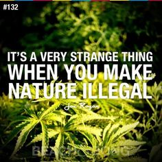 Buy Cannabis Seeds from Seedsman from the most trusted brand on the market benefit from discreet worldwide delivery, free cannabis seeds and excellent customer service. We offer marijuana seeds from over 60 cannabis breeders. Funny Weed Quotes, Stoner Quotes, 420 Quotes, Weed Humor, Marijuana Plants, Smoking Weed, Ganja, Medical Marijuana, Just In Case
