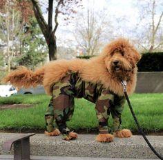 Army Dog!