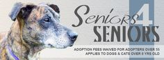 SAPA will waive adoption fees for adopters over 55 years old for dogs and cats over the age of 8!