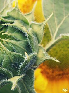 mamaolgi.blogspot.com