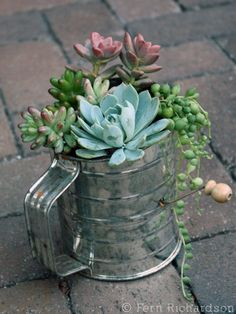Reusing Old Kitchen Utensils • Repurposed flour strainer as Succulent container | ecogreenlove