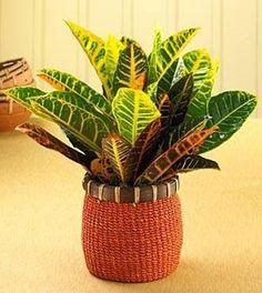 le piante | Piante da appartamento - Piante da interno - piante appartamento