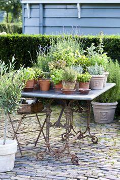 kruidentuin op plukhoogte #kruiden #herbs #kitchengarden #moestuin