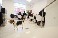 Foto: Heribert Corn Dogs, Animals, Animales, Animaux, Pet Dogs, Doggies, Animal, Animais