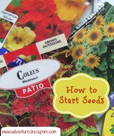 New to having your own garden? Learn how to start your seeds so that they flourish and grow!