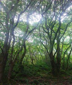 At Ashley Combe, Ada Lovelace's estate on the Devon Somerset border. Visit Devon, Ada Lovelace, Sense Of Place, Somerset, Writers, Texts, Places, Authors, Captions