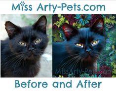 Indigo!  Portrait by Miss Arty-Pets! (Anita Drieseberg) #beforeandafter #petportrait #blackcat
