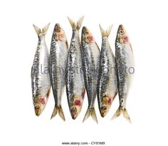 Image result for fresh sardines on a plate painting