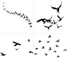 Image result for crows flying