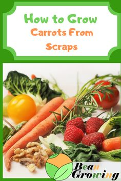 Learning growing carrots from scraps also extends to most of your favourite garden veggies, allowing you to kill two birds with one stone. Growing Carrots, Growing Veggies, My Secret Garden, Growing Flowers, Garden Tips, Houseplants, Beautiful Gardens, Blogging, Birds