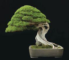 Fine Bonsai - Art and Nature