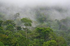 Mata Atlântica (Atlantic Forest), Brazil.