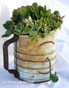 Container Gardening Ideas Garden design ideas using low-water, firewise succulent plants by book author Debra Lee Baldwin Container Gardening Vegetables, Succulents In Containers, Container Plants, Cacti And Succulents, Planting Succulents, Container Flowers, Vegetable Gardening, Garden Junk, Diy Garden