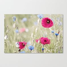 Fantasy Nature Poppy Field Stretched Canvas by Tanja Riedel - $85.00