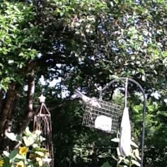 Visiting mockingbird