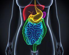 Třídenní půst dokáže zregenerovat celý imunitní systém - zkusíte to i vy? - www. Lava Lamp, Table Lamp, Decor, Internet, Exercise, Diet, Health, Fitness, Youtube
