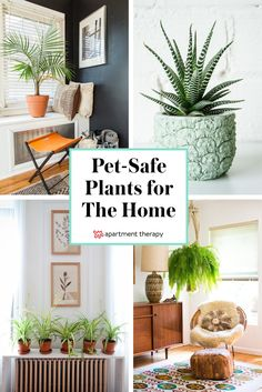 5 Pet Friendly Plants to green up your living space. Your furbabies and lovable pets are going to thrive in green environments without the toxins found in many indoor plants!