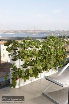 Minigarden Vertical   der vertikale Garten für #Terrasse und #Balkonien #verticalgardening #verticalfarming