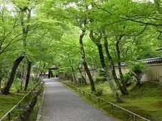 嵐山若葉まつり〜雨中もステキな嵐山|おじゃかんばん『フォトブラ☆散歩物語』