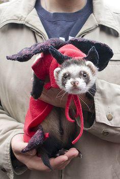 Ferret costume