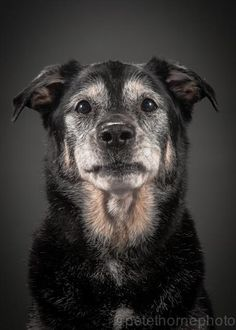 A Photographer Is Taking The Most Adorable And Touching Pictures Of Incredibly Old Dogs / 4. Jackson