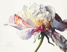 Rosie Sanders, 'Like morning glow', Jonathan Cooper Fungi Art, Colorful Art, Art Painting, Botanical Painting, Botanical Art, Floral Art, Watercolor Flowers, Art, Botanical Watercolor