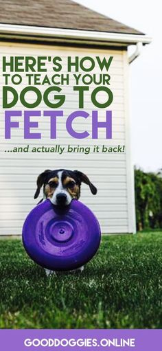 How to Teach Your Dog to Fetch. Check out these dog training tips that are fun and easy. #dogtraining #fetch