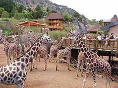 Cheyenne Mountain Zoo, Colorado. I went and mom was licked my a giraffe! Really fun