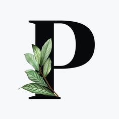 P Letter Design, Alphabet Letters Design, Typography Alphabet, P Logo Design, Lettering Design, Hand Lettering, Floral Letters, Monogram Letters, Capital Letter Fonts