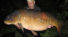 """Britain's biggest fish caught in titanic tussle after four-year search Brian Humphries with the giant mirror carp named """"The Parrot"""" Best Fishing Rods, Pike Fishing, Carp Fishing, Giant Fish, Big Fish, Giant Mirror, Puffins Bird, Monster Fishing, Fishing Times"""