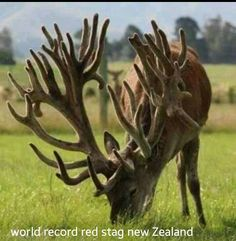 wow! world record rack