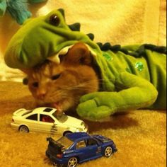 Skittles the godzilla cat in an action scene attacking toy cars