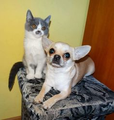 Cleo & Margaret my love