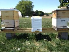 Good blog if I ever want bees