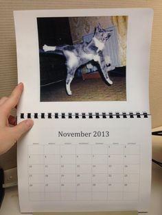 Karate Catz Calendar!!Can i haz???