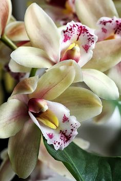 Favorite flower: Orchids