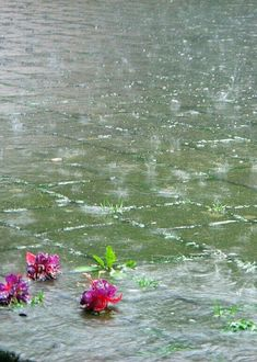 Spring rain cleanses everything & gives us more flowers in the garden! Walking In The Rain, Singing In The Rain, Rainy Night, Rainy Days, Its Raining Its Pouring, Smell Of Rain, I Love Rain, Rain Go Away, Rain Photography