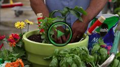 Basic Container Gardening with William Moss- keeping a large container healthy
