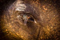 Elephant, Khao Sok, Thailand