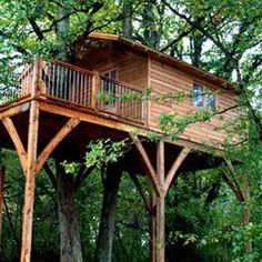 Cabane dans les arbres / Treehouse