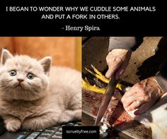 Please understand the difference. Do not encourage animal abuse just because your tongue dominated your heart.  Please stop animal cruelty and buy cruelty free products